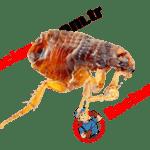 Devlet Kurumlarında Haşere/Böcek ilaçlama