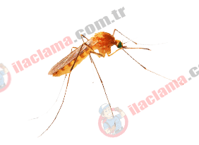 haşerehane böcek resim