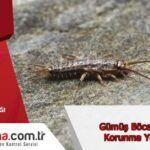 Gümüş Böceği ilacı ve Korunma Yöntemleri