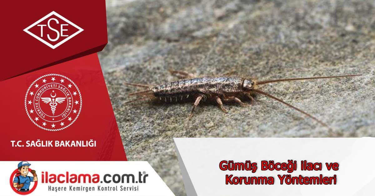 gümüş-böceği-ilacı-istanbul, gümüş-böceği-korunma-yöntemi