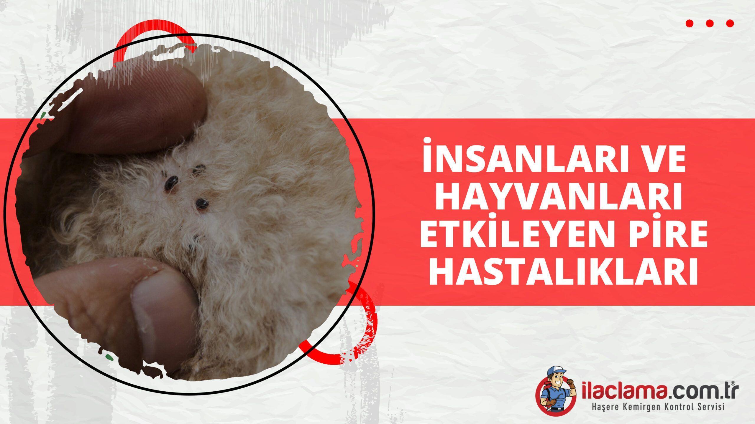 İnsanları ve Hayvanları Etkileyen Pire Hastalıkları