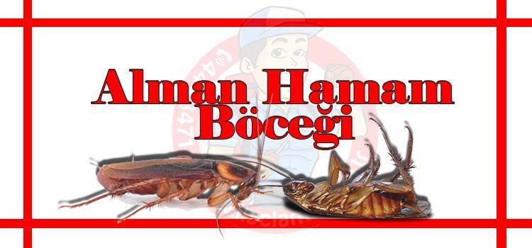 alman-hamam-böceği-ilaçlama, böcek-ilaçlama-fiyat-istanbul