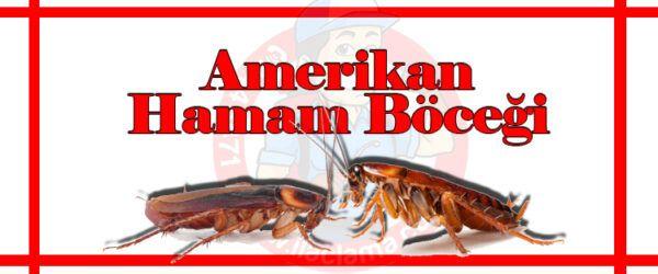 Amerikan Hamam Böceği