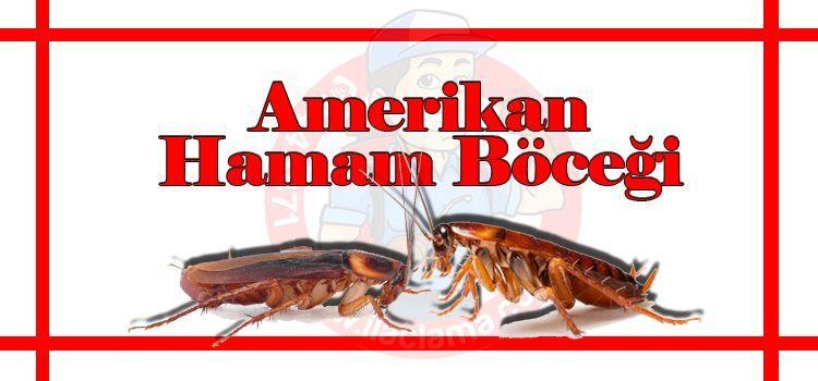 amerikan-hamam-böceği, hamam-böceği-ilaçlama-istanbul