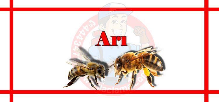 arı-ilaçlama-fiyat, arı-ilaçlama-istanbul