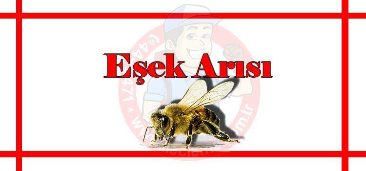 eşek-arısı-ilaçlama-fiyat, eşek-arısı-istanbul