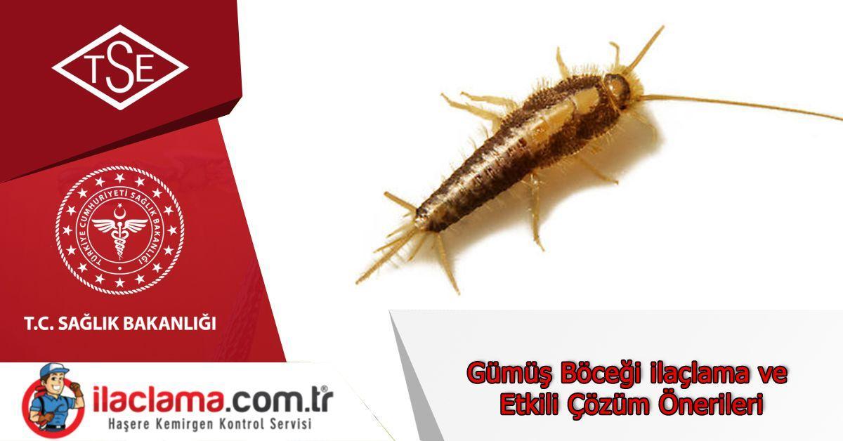 Gümüş Böceği ilaçlama ve Etkili Çözüm Önerileri