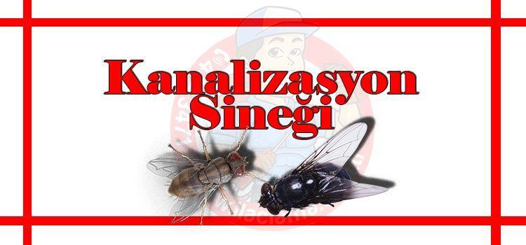 kanalizasyon-sineği-ilaçlama, sinek-ilaçlama-istanbul