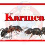 Hastane Böcek ilaçlama