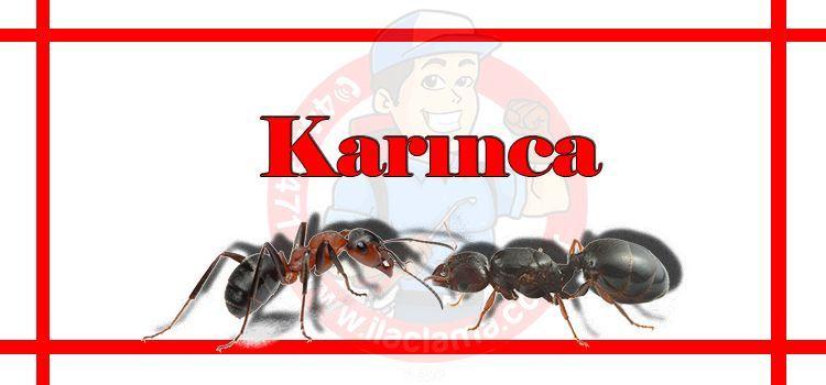 karınca-ilaçlama-fiyat, karınca-ilaçlama-istanbul