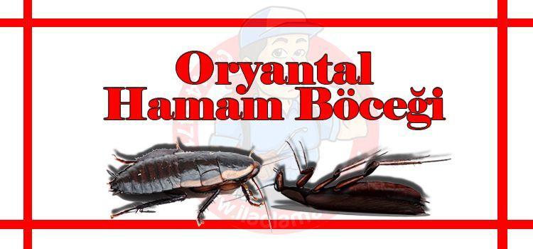 oryantal-hamam-böceği-ilaçlama-fiyat, hamam-böceği-ilaçlama-istanbul