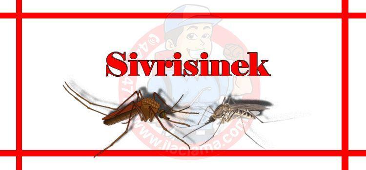 sivrisinek-ilaçlama-istanbul, sivrisinek-ilaçlama-fiyat