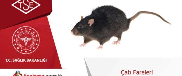çatı fareleri