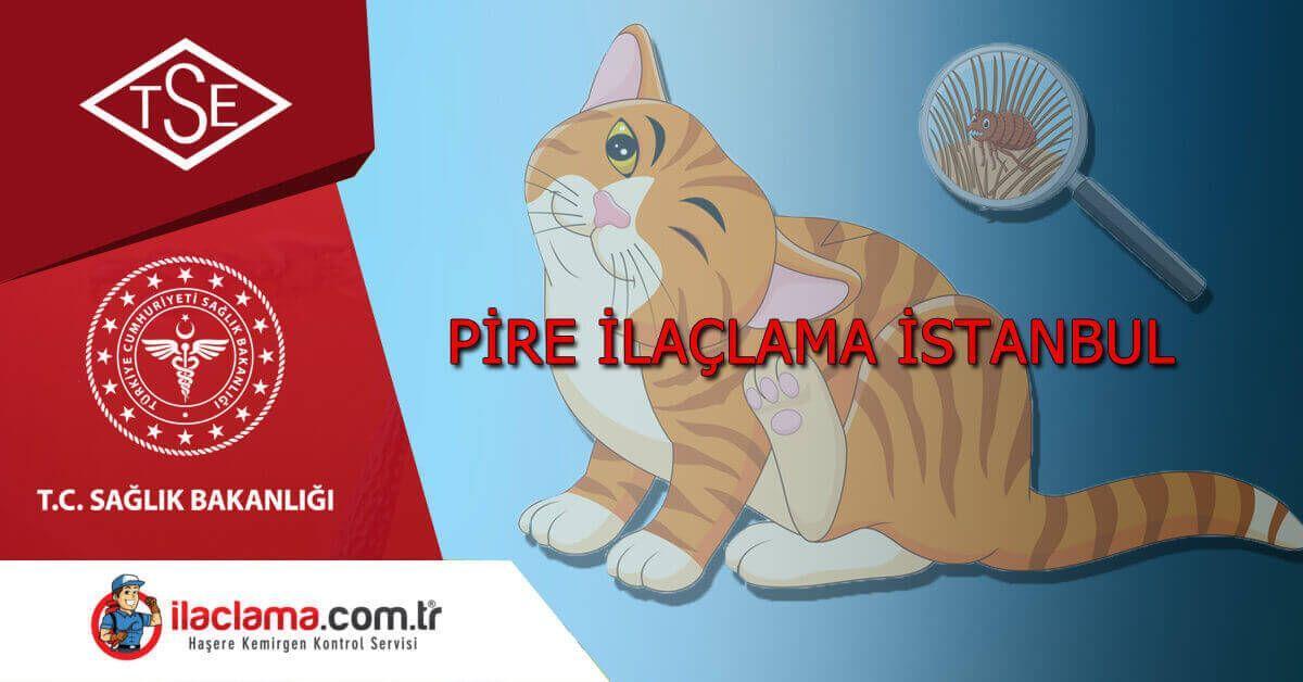 istanbul pire ilaçlama