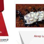 Akrep Larvaları