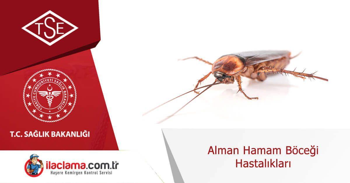 alman-hamamböceği-hastalıkları
