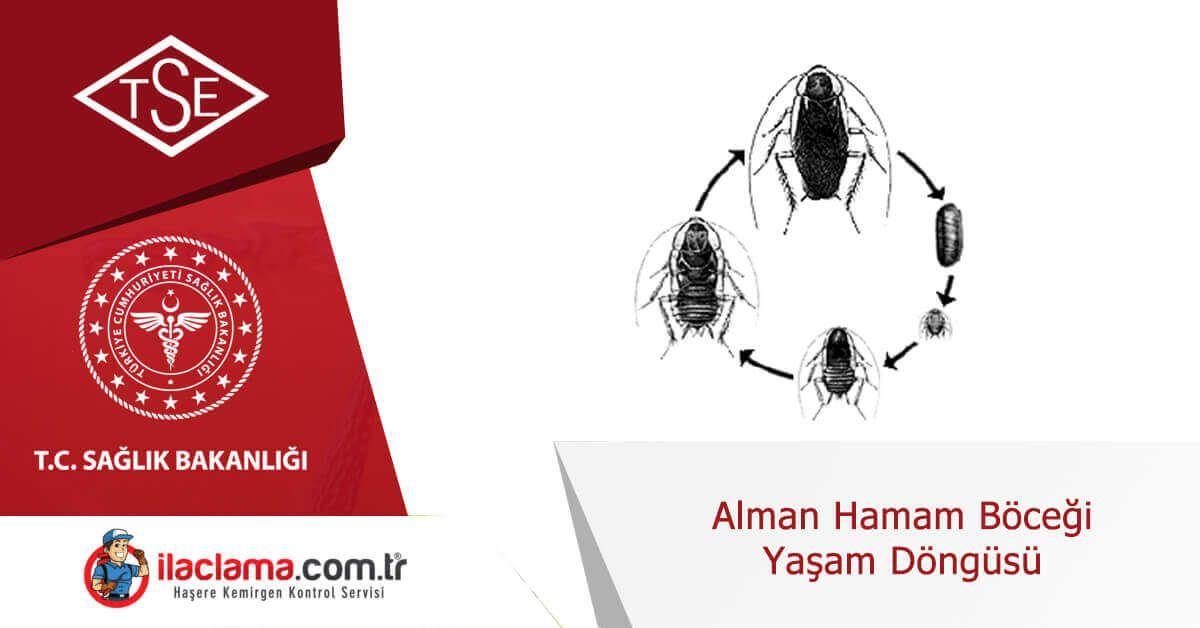alman-hamamböceği-yaşam-döngüsü