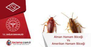alman-hamamböceği-vs-amerikan-hamam-böceği