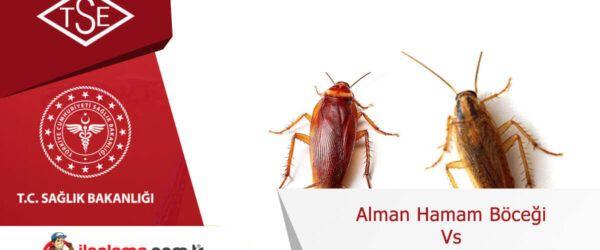 Alman Hamamböceği vs Amerikan Hamamböceği
