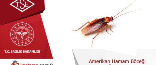 Amerikan hamamböceği üremesi