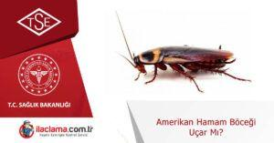 amerikan-hamamböceği-uçar-mı
