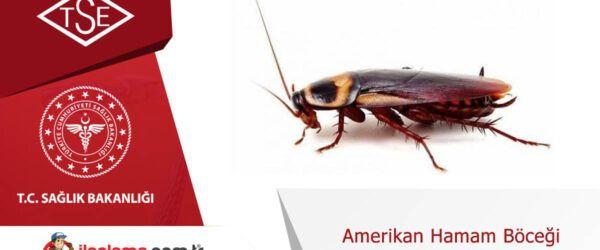 Amerikan Hamamböceği Uçar mı?