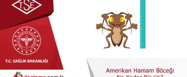 Amerikan hamamböceği ne kadar büyük?