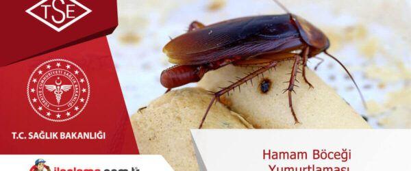 Hamamböceği Yumurtlaması