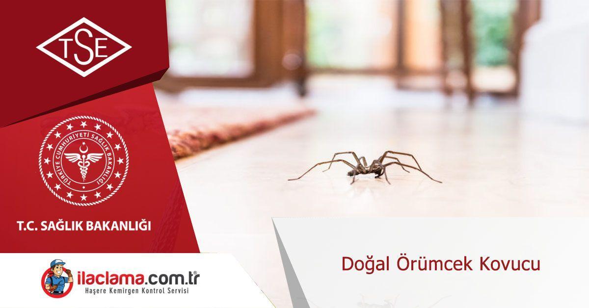 doğal-örümcek-kovucu