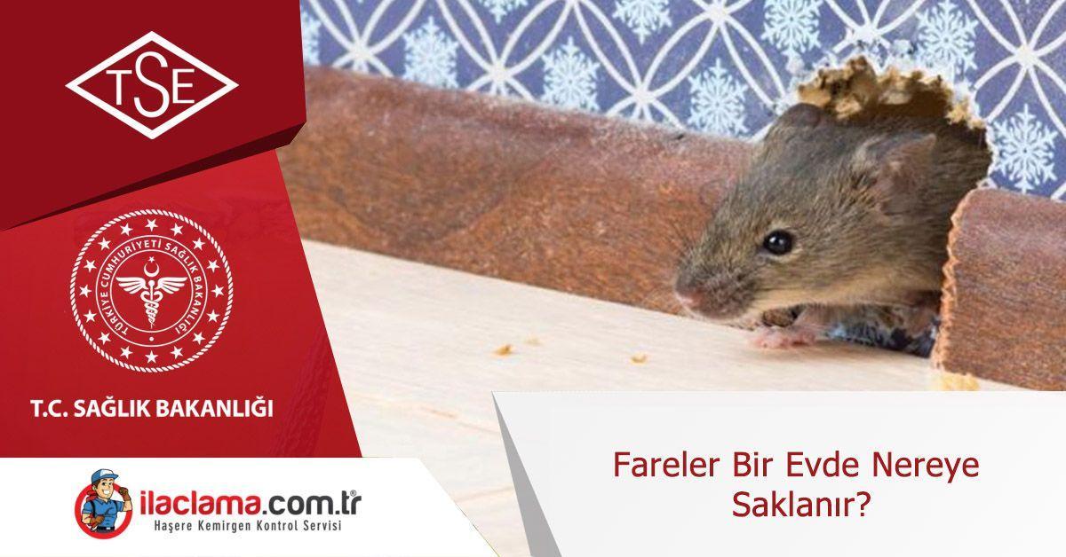 fareler-bir-evde-nereye-saklanırlar