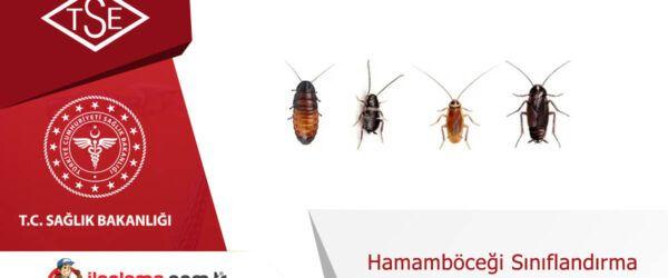 Hamamböceği Sınıflandırma
