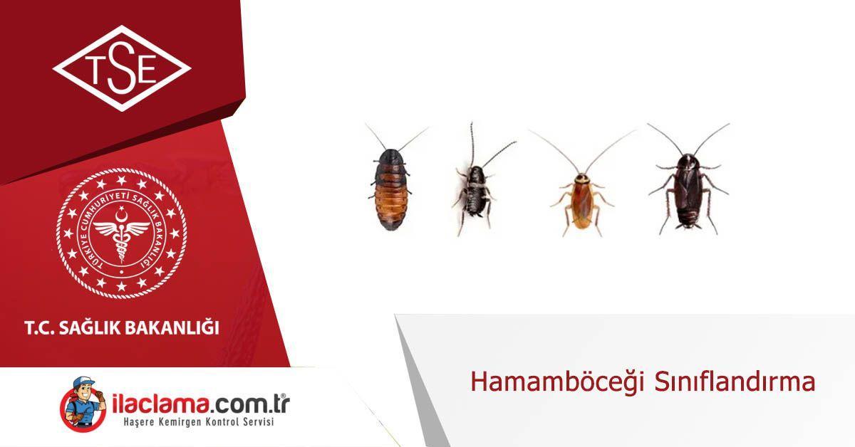 Hamamböceği Sınıflandırma, Hamam böceği kontrolü