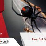 Kara dul örümcekler