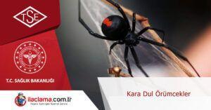 kara-dul-örümcekler