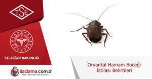 oryantal-hamamböceği-istilası-belirtileri