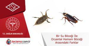 su-böceği-oryantal-hamamböceği-arasındaki-farklar