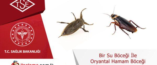 Bir Su Böceği ile Oryantal Hamam Böceği Arasındaki Farklar