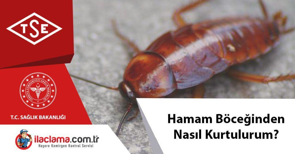 hamam böceğinden nasıl kurtulurum ?